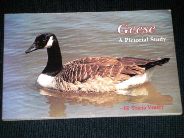 Image for Geese a Pictorial Study